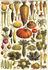 Postcard | Légumes_
