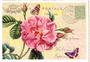 Postcard Edition Tausendschoen | Rose_