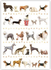 Postcard | Dogs_