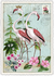 Postcard Edition Tausendschoen | Flamingos_