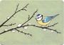 Postcard Gutrath Verlag | Blue Tit_